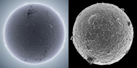 sun and egg.jpg